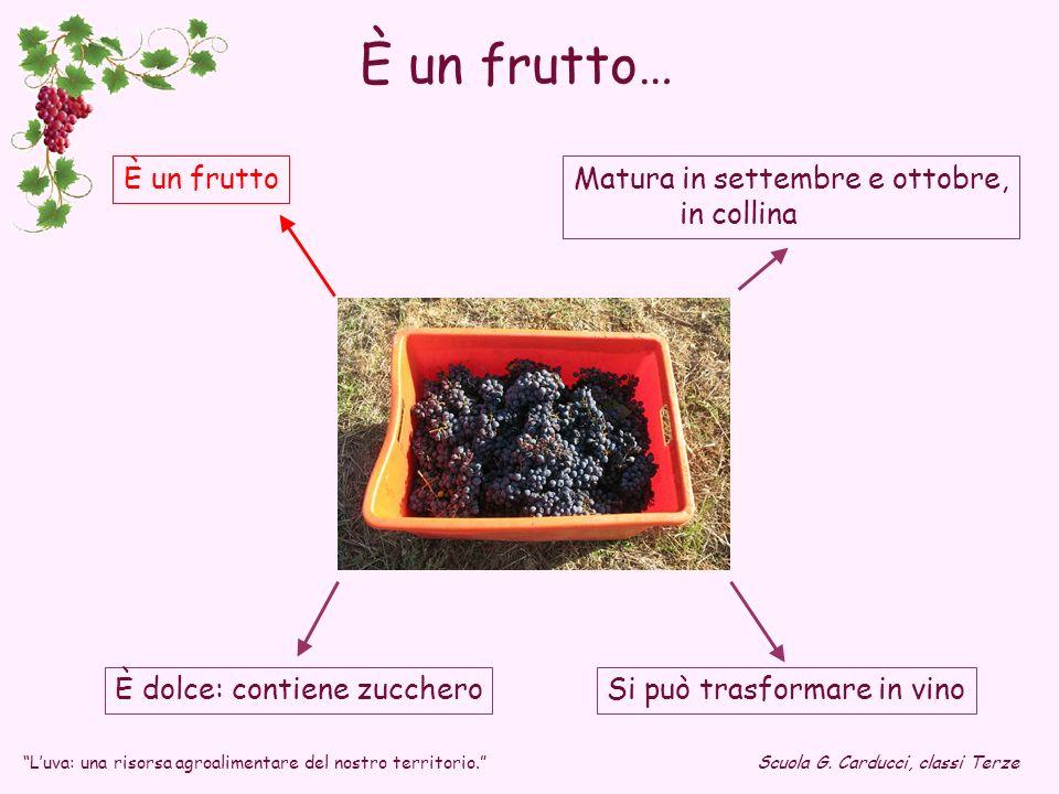 È dolce: contiene zucchero Matura in settembre e ottobre, in collina È un frutto Si può trasformare in vino È un frutto… Luva: una risorsa agroaliment