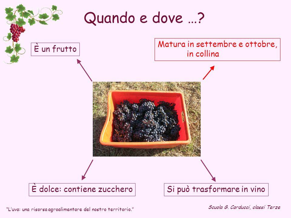 È dolce: contiene zucchero Matura in settembre e ottobre, in collina È un frutto Si può trasformare in vino Luva: una risorsa agroalimentare del nostr
