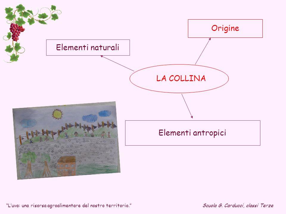 Luva: una risorsa agroalimentare del nostro territorio.Scuola G. Carducci, classi Terze LA COLLINA Elementi naturali Origine Elementi antropici
