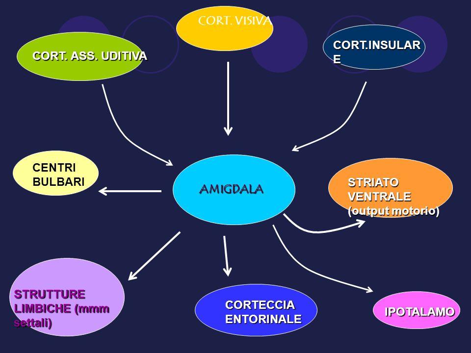 AMIGDALA CORT. ASS. UDITIVA CORT. VISIVA CORT.INSULAR E STRIATO VENTRALE (output motorio) IPOTALAMO CORTECCIA ENTORINALE STRUTTURE LIMBICHE (mmm setta
