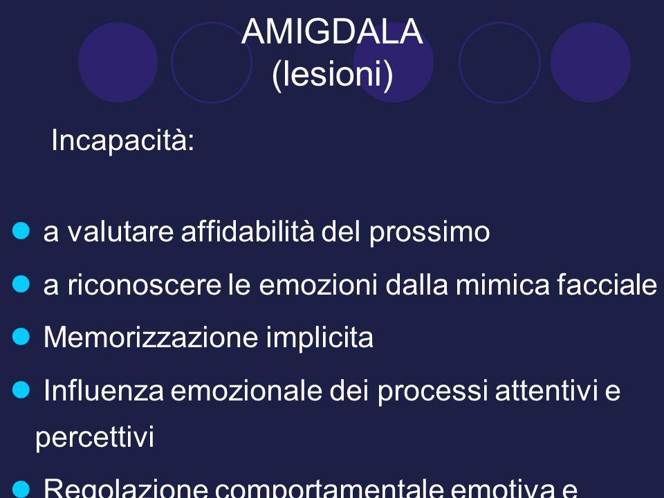 AMIGDALA (lesioni) Incapacità: a valutare affidabilità del prossimo a riconoscere le emozioni dalla mimica facciale Memorizzazione implicita Influenza