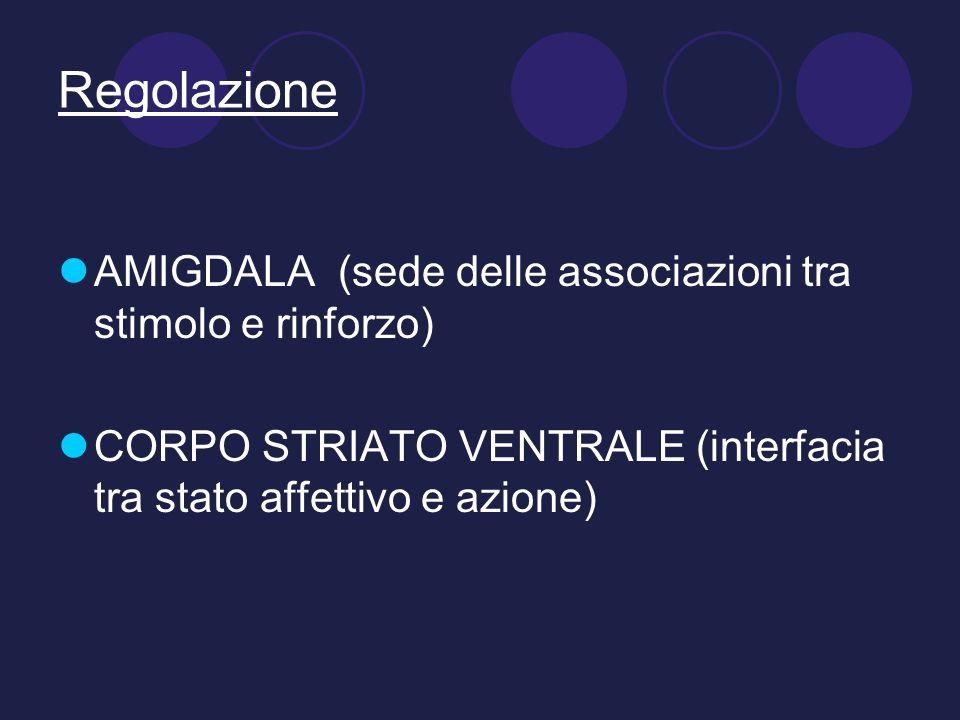 Regolazione AMIGDALA (sede delle associazioni tra stimolo e rinforzo) CORPO STRIATO VENTRALE (interfacia tra stato affettivo e azione)
