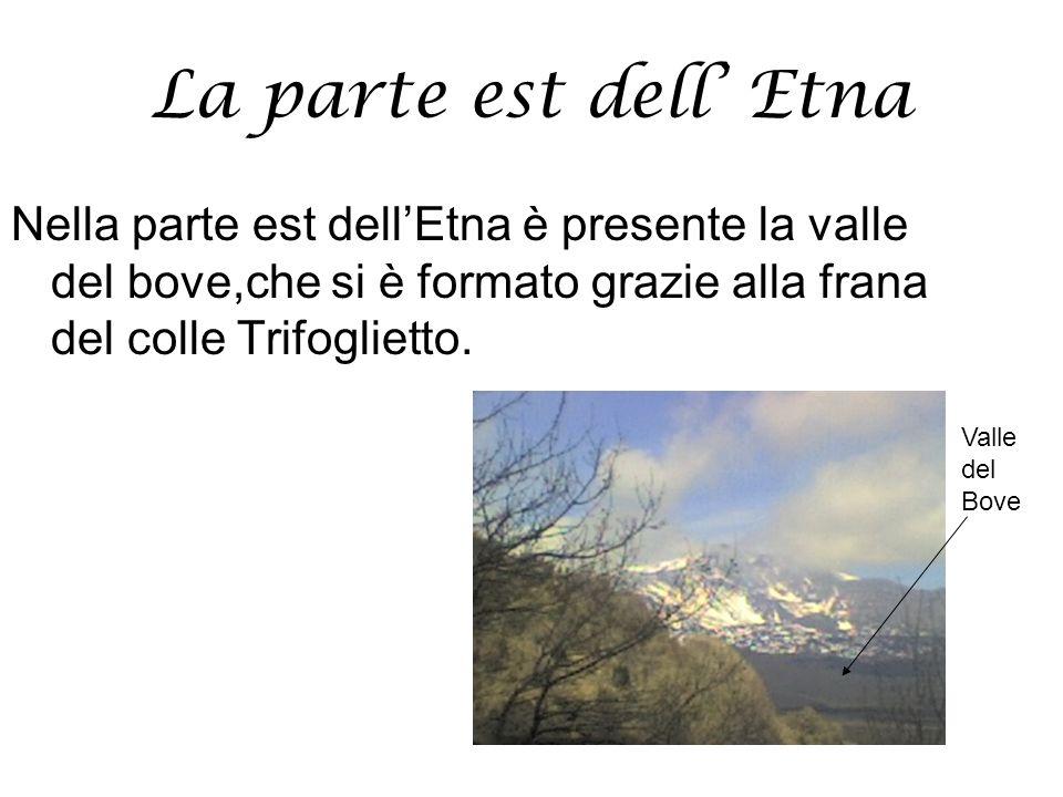 La parte est dell Etna Nella parte est dellEtna è presente la valle del bove,che si è formato grazie alla frana del colle Trifoglietto. Valle del Bove