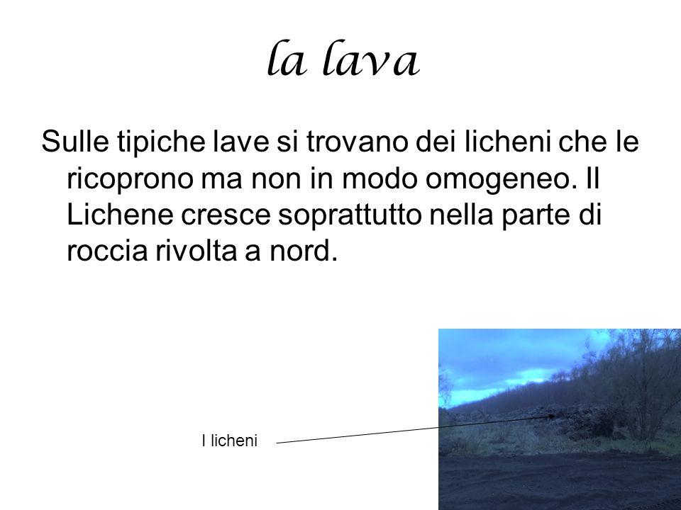 la lava Sulle tipiche lave si trovano dei licheni che le ricoprono ma non in modo omogeneo. Il Lichene cresce soprattutto nella parte di roccia rivolt