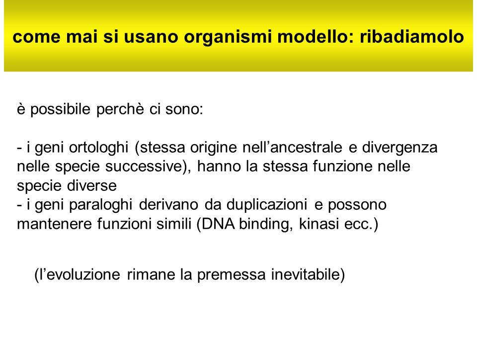 come mai si usano organismi modello: ribadiamolo è possibile perchè ci sono: - i geni ortologhi (stessa origine nellancestrale e divergenza nelle spec