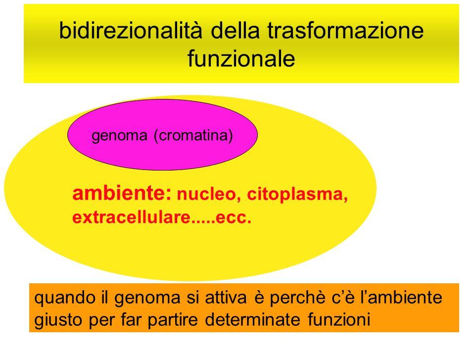 bidirezionalità della trasformazione funzionale genoma (cromatina) ambiente: nucleo, citoplasma, extracellulare.....ecc. quando il genoma si attiva è