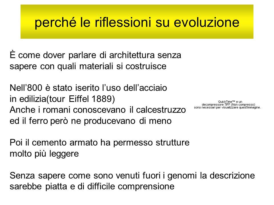 perché le riflessioni su evoluzione È come dover parlare di architettura senza sapere con quali materiali si costruisce Nell800 è stato iserito luso d