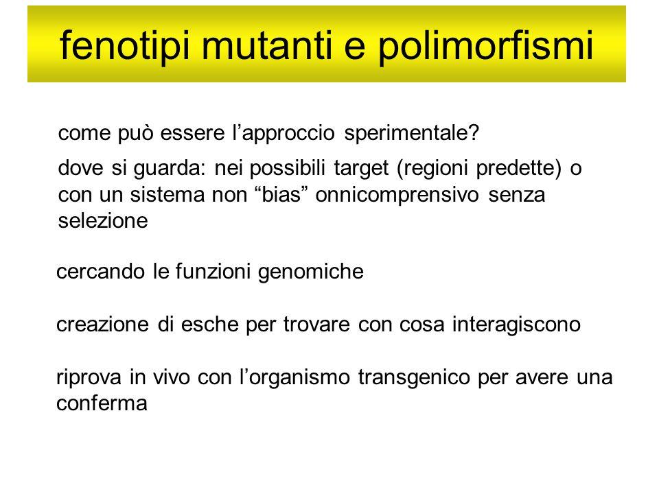 fenotipi mutanti e polimorfismi come può essere lapproccio sperimentale? dove si guarda: nei possibili target (regioni predette) o con un sistema non