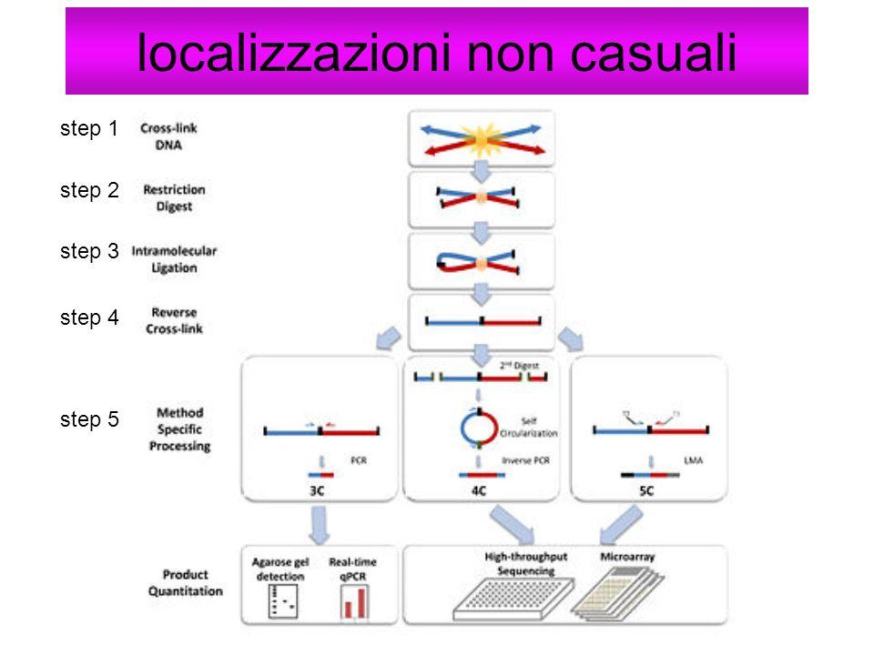 localizzazioni non casuali step 1 step 2 step 3 step 4 step 5