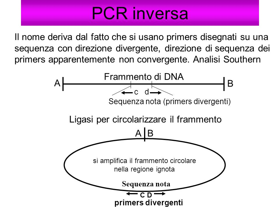 PCR inversa Il nome deriva dal fatto che si usano primers disegnati su una sequenza con direzione divergente, direzione di sequenza dei primers appare