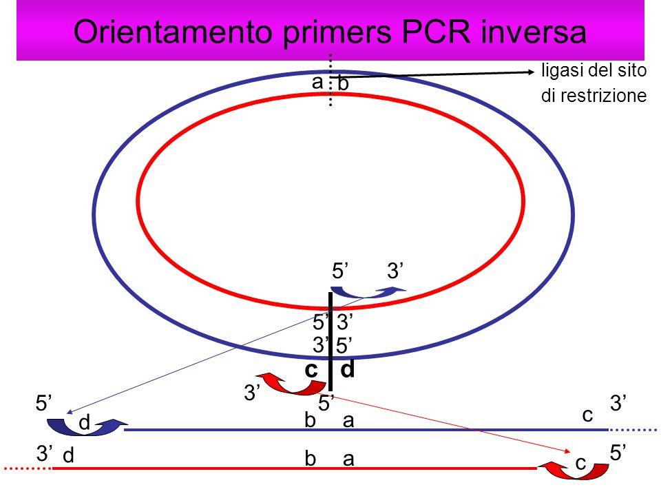 Orientamento primers PCR inversa 5 3 35 53 3 c d d c c d 53 5 3 5 a b ba ab ligasi del sito di restrizione
