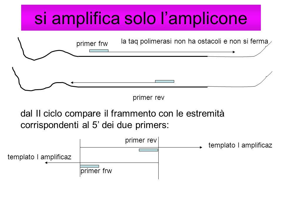 si amplifica solo lamplicone dal II ciclo compare il frammento con le estremità corrispondenti al 5 dei due primers: primer frw la taq polimerasi non