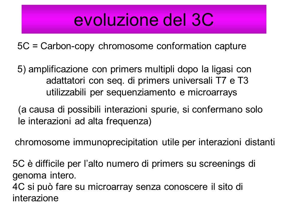 evoluzione del 3C 5C = Carbon-copy chromosome conformation capture 5) amplificazione con primers multipli dopo la ligasi con adattatori con seq. di pr