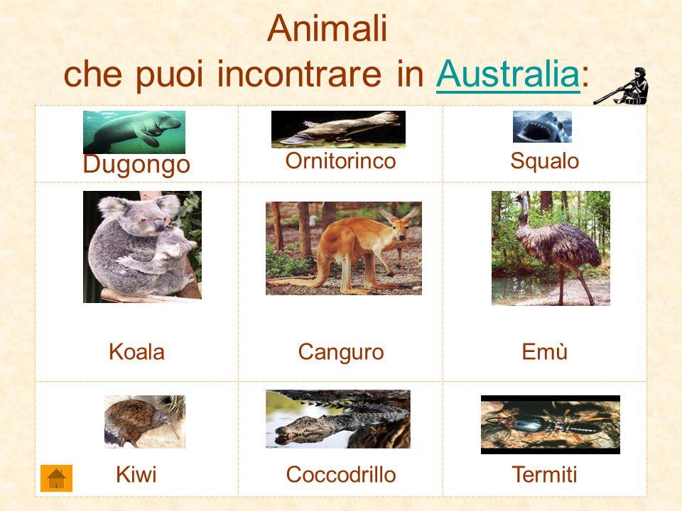 Animali che puoi incontrare in Australia:Australia Dugongo OrnitorincoSqualo KoalaCanguroEmù KiwiCoccodrilloTermiti