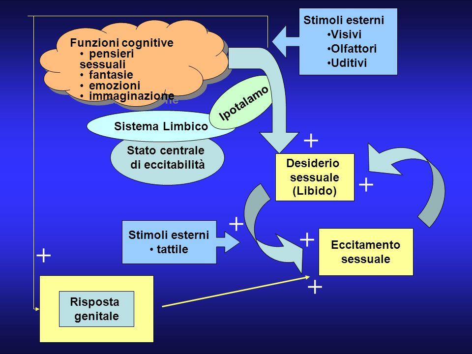 Stato centrale di eccitabilità Sistema Limbico Stimoli esterni Visivi Olfattori Uditivi Desiderio sessuale (Libido) Ipotalamo Eccitamento sessuale Sti