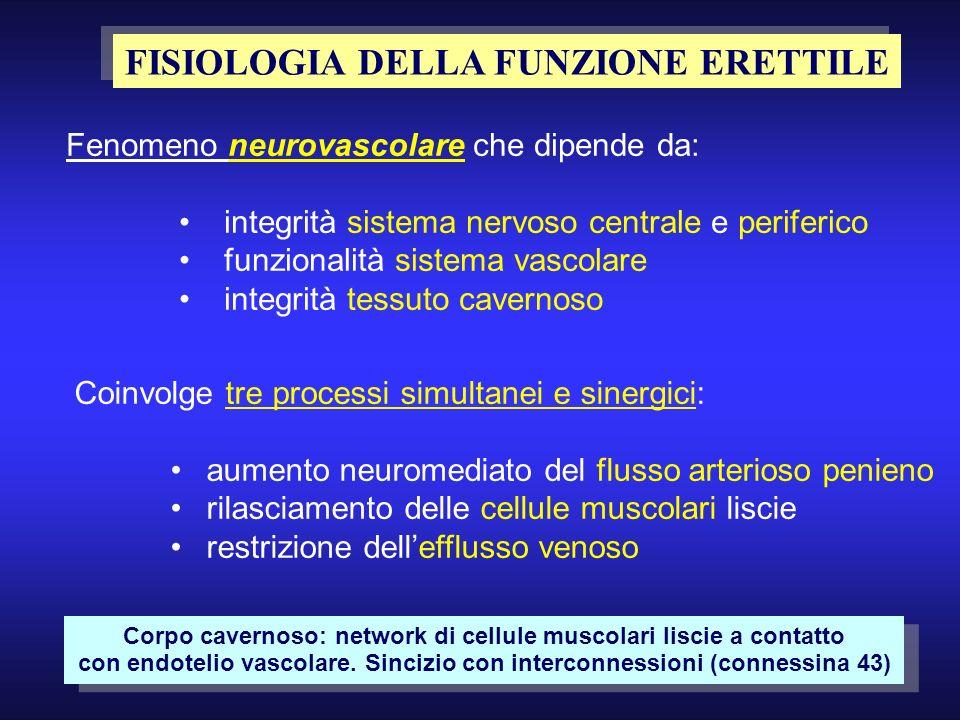 FISIOLOGIA DELLA FUNZIONE ERETTILE Fenomeno neurovascolare che dipende da: integrità sistema nervoso centrale e periferico funzionalità sistema vascol