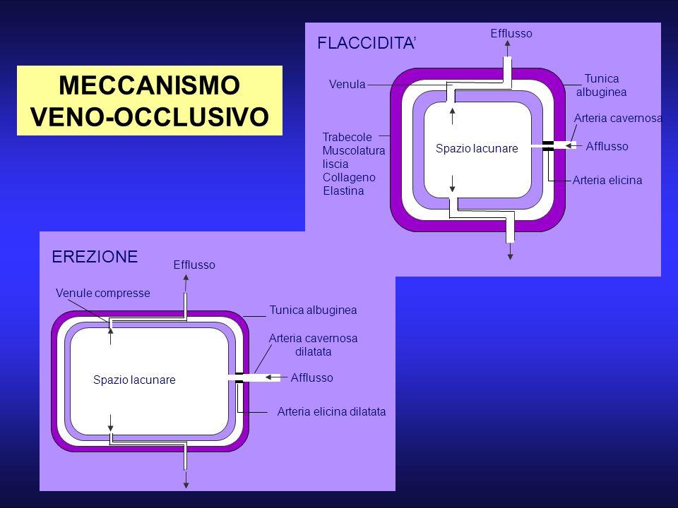 MECCANISMO VENO-OCCLUSIVO FLACCIDITA Spazio lacunare Efflusso Venula Trabecole Muscolatura liscia Collageno Elastina Tunica albuginea Arteria cavernos