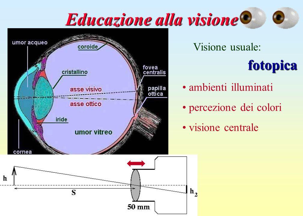 Educazione alla visione Visione usuale: fotopica ambienti illuminati percezione dei colori visione centrale