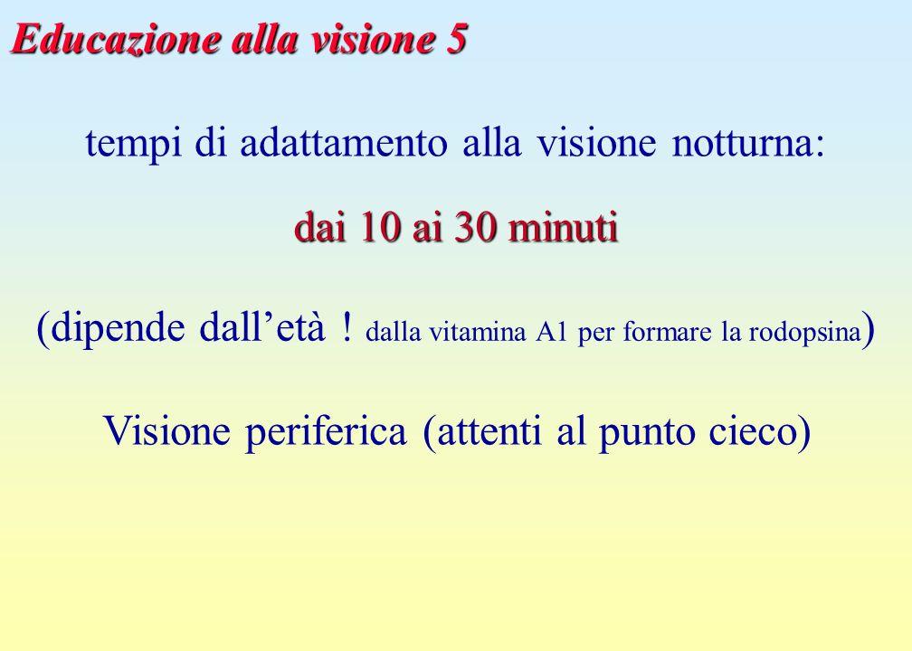 Educazione alla visione 5 tempi di adattamento alla visione notturna: dai 10 ai 30 minuti (dipende dalletà ! dalla vitamina A1 per formare la rodopsin