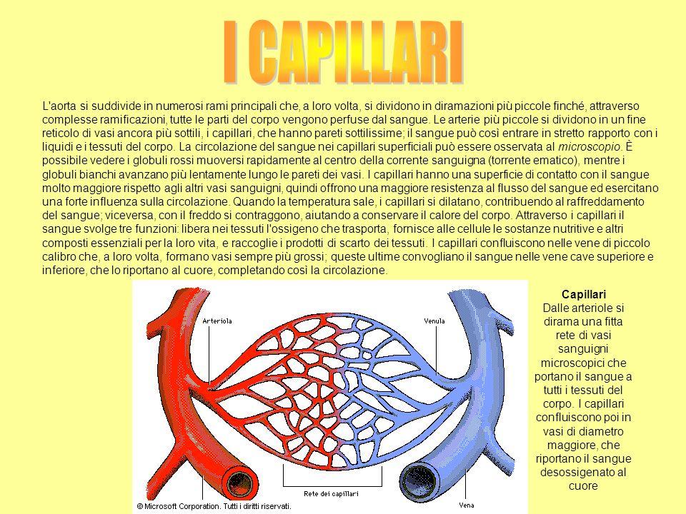 L'aorta si suddivide in numerosi rami principali che, a loro volta, si dividono in diramazioni più piccole finché, attraverso complesse ramificazioni,