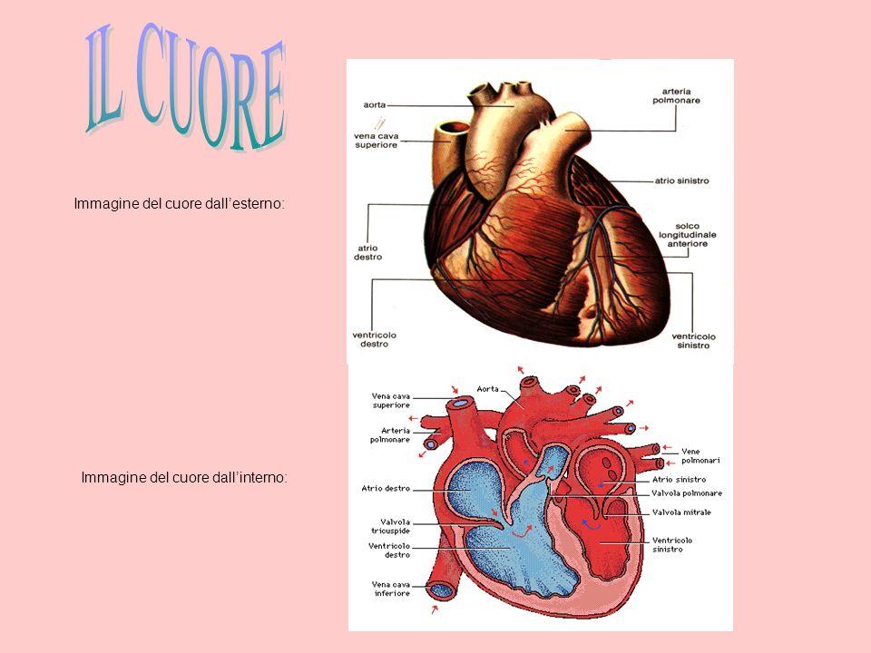 Immagine del cuore dallesterno: Immagine del cuore dallinterno: