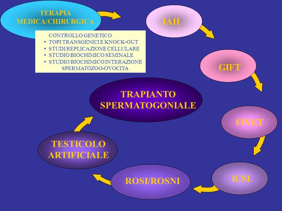 TESTICOLO ARTIFICIALE TRAPIANTO SPERMATOGONIALE ROSI/ROSNIICSIFIVET GIFT IAH TERAPIA MEDICA/CHIRURGICA CONTROLLO GENETICO TOPI TRANSGENICI E KNOCK-OUT STUDI REPLICAZIONE CELLULARE STUDIO BIOCHIMICO SEMINALE STUDIO BIOCHIMICO INTERAZIONE SPERMATOZOO-OVOCITA