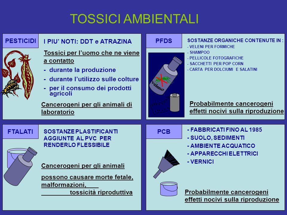 PESTICIDI I PIU NOTI: DDT e ATRAZINA Tossici per luomo che ne viene a contatto - durante la produzione - durante lutilizzo sulle colture - per il consumo dei prodotti agricoli Cancerogeni per gli animali di laboratorio PCB - FABBRICATI FINO AL 1985 - SUOLO, SEDIMENTI - AMBIENTE ACQUATICO - APPARECCHI ELETTRICI - VERNICI Probabilmente cancerogeni effetti nocivi sulla riproduzione PFDS Probabilmente cancerogeni effetti nocivi sulla riproduzione SOSTANZE ORGANICHE CONTENUTE IN : - VELENI PER FORMICHE - SHAMPOO - PELLICOLE FOTOGRAFICHE - SACCHETTI PER POP CORN - CARTA PER DOLCIUMI E SALATINI FTALATI Cancerogeni per gli animali possono causare morte fetale, malformazioni, tossicità riproduttiva SOSTANZE PLASTIFICANTI AGGIUNTE AL PVC PER RENDERLO FLESSIBILE TOSSICI AMBIENTALI