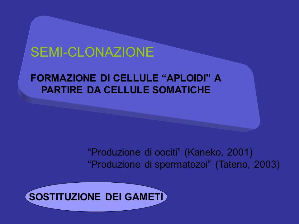 SEMI-CLONAZIONE FORMAZIONE DI CELLULE APLOIDI A PARTIRE DA CELLULE SOMATICHE Produzione di oociti (Kaneko, 2001) Produzione di spermatozoi (Tateno, 2003) SOSTITUZIONE DEI GAMETI