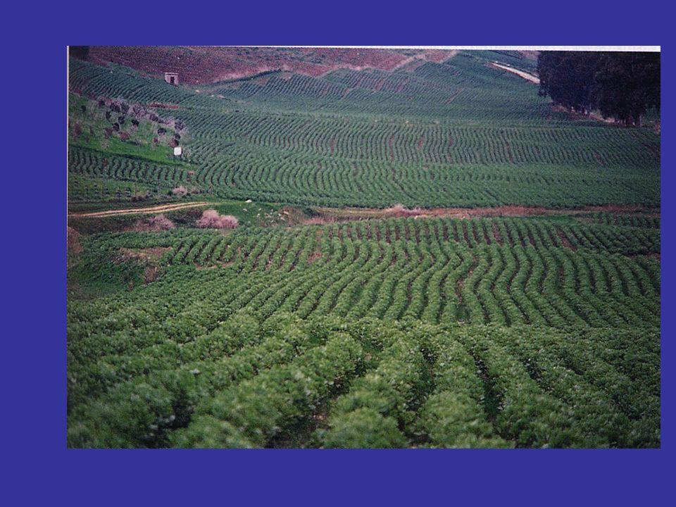 Inconvenienti di carattere ambientale causati allagricoltura convenzionale.
