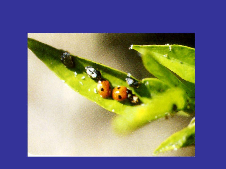 Per agricoltura biologica si intende il metodo di produzione che esclude luso dei prodotti di sintesi per la difesa fitosanitaria e per la nutrizione delle piante.