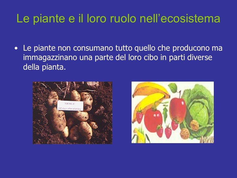 Le piante non consumano tutto quello che producono ma immagazzinano una parte del loro cibo in parti diverse della pianta. Le piante e il loro ruolo n