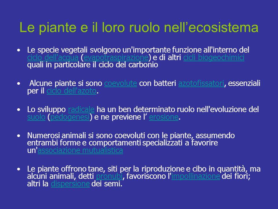 Le specie vegetali svolgono un'importante funzione all'interno del ciclo dell'acqua (evapotraspirazione) e di altri cicli biogeochimici quali in parti