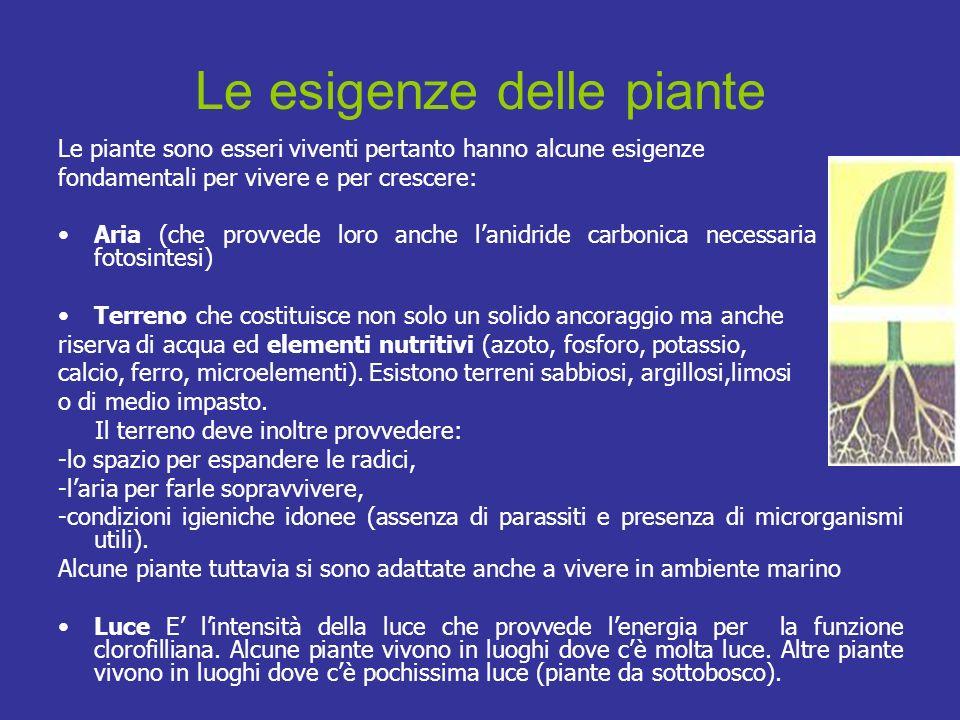 Le esigenze delle piante Le piante sono esseri viventi pertanto hanno alcune esigenze fondamentali per vivere e per crescere: Aria (che provvede loro
