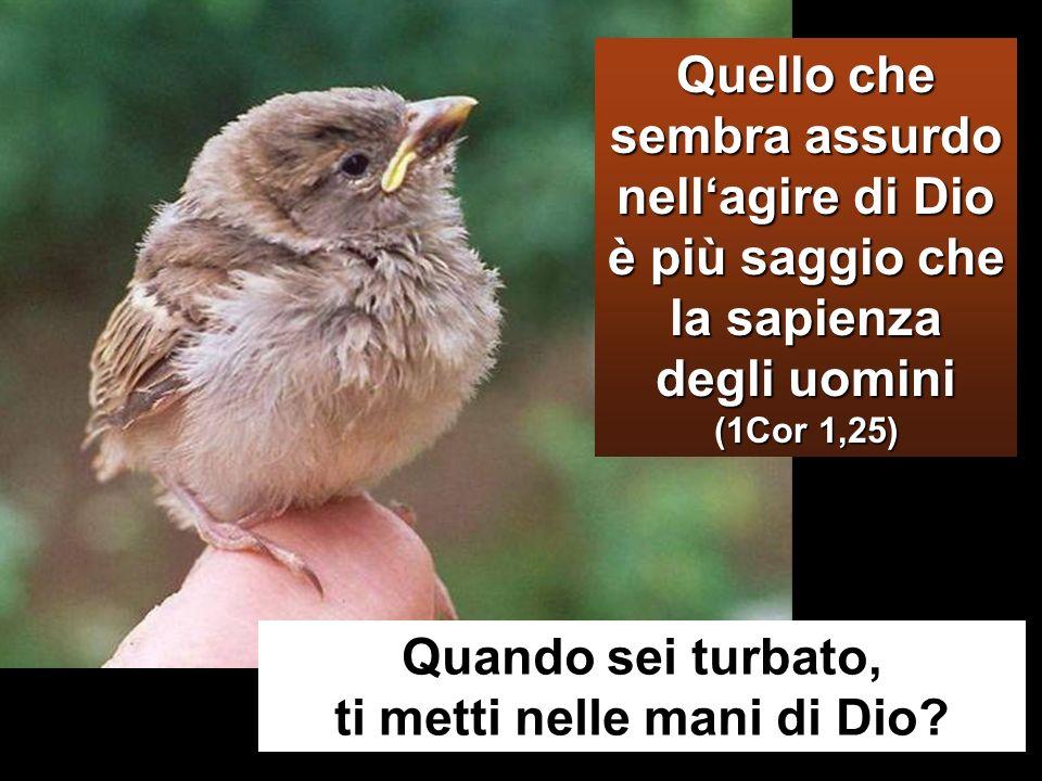 Adesso lanima mia è turbata; che cosa dirò? Padre, salvami da questora? Ma proprio per questo sono giunto a questora! Padre, glorifica il tuo nome».