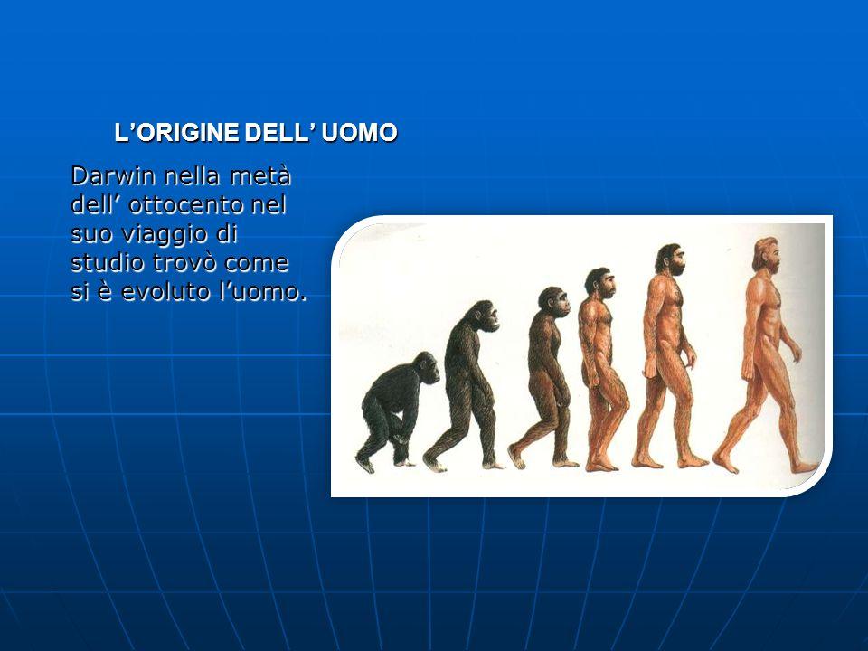 LORIGINE DELL UOMO Darwin nella metà dell ottocento nel suo viaggio di studio trovò come si è evoluto luomo.