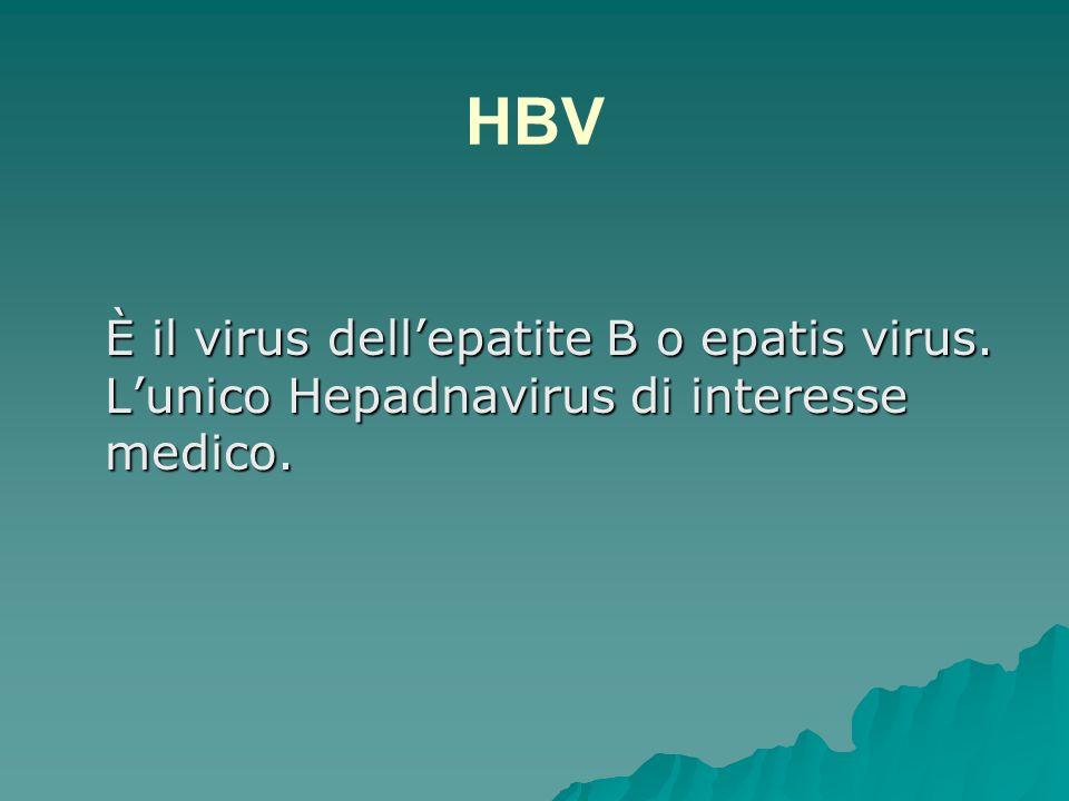 Virus dellepatite umana HBV Formato da un DNA circolare parzialmente bicatenario.