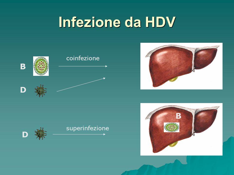 Infezione da HDV D D B B coinfezione superinfezione