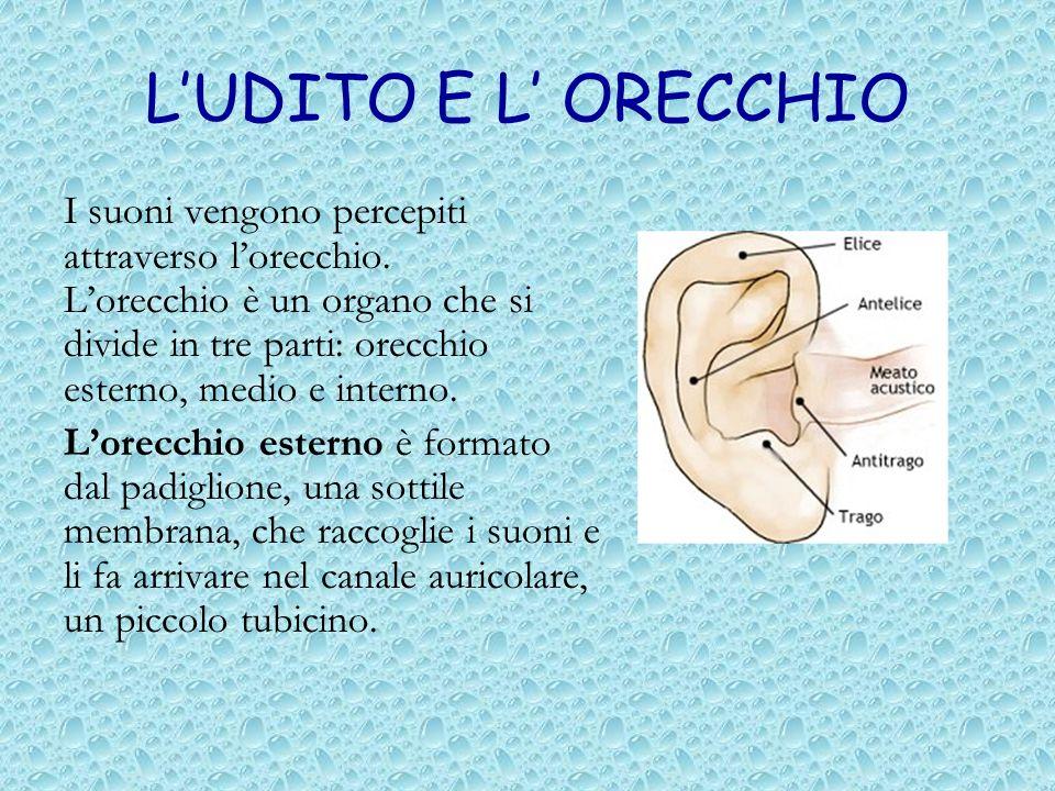 LUDITO E L ORECCHIO I suoni vengono percepiti attraverso lorecchio. Lorecchio è un organo che si divide in tre parti: orecchio esterno, medio e intern