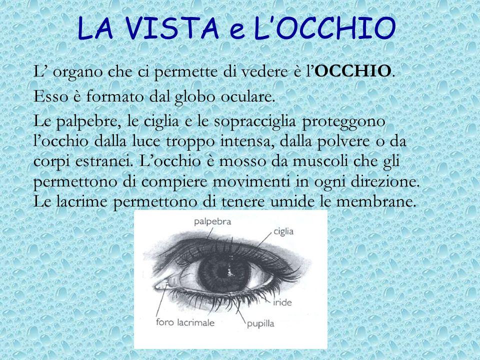 LA VISTA e LOCCHIO L organo che ci permette di vedere è lOCCHIO. Esso è formato dal globo oculare. Le palpebre, le ciglia e le sopracciglia proteggono