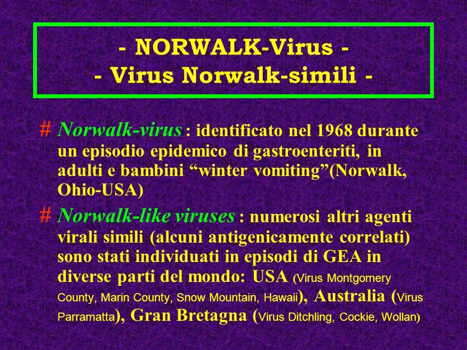 - NORWALK-Virus - - Virus Norwalk-simili - #Norwalk-virus : identificato nel 1968 durante un episodio epidemico di gastroenteriti, in adulti e bambini