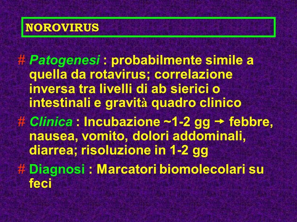 #Patogenesi : probabilmente simile a quella da rotavirus; correlazione inversa tra livelli di ab sierici o intestinali e gravit à quadro clinico #Clin