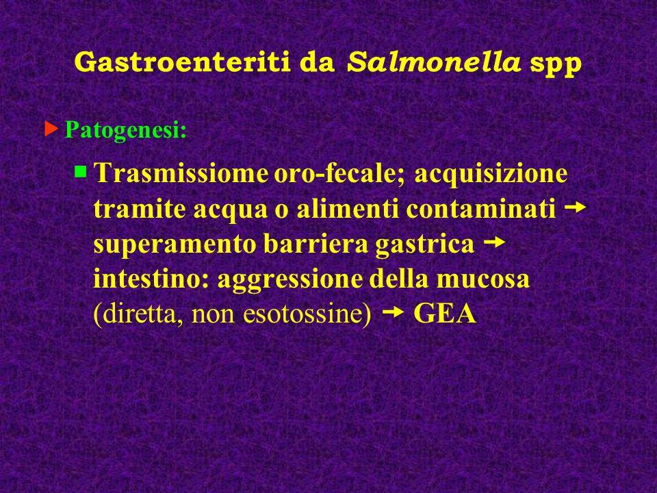 Gastroenteriti da Salmonella spp (Salmonellosi minori) Superata la barriera gastrica, le salmonelle invadono le cellule epiteliali dellintestino tenue, moltiplicandosi attivamente a livello della lamina propria.