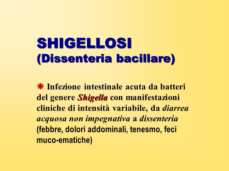 SHIGELLOSI (Dissenteria bacillare) Shigella Infezione intestinale acuta da batteri del genere Shigella con manifestazioni cliniche di intensità variab