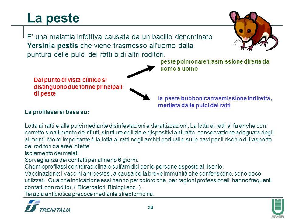 34 E' una malattia infettiva causata da un bacillo denominato Yersinia pestis che viene trasmesso all'uomo dalla puntura delle pulci dei ratti o di al