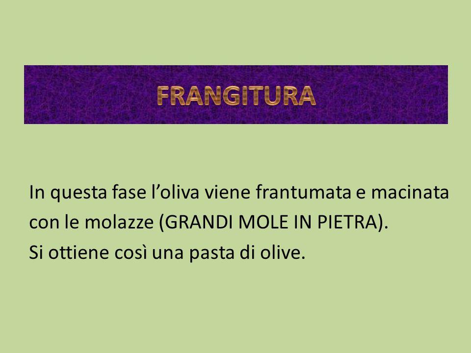 In questa fase loliva viene frantumata e macinata con le molazze (GRANDI MOLE IN PIETRA). Si ottiene così una pasta di olive.