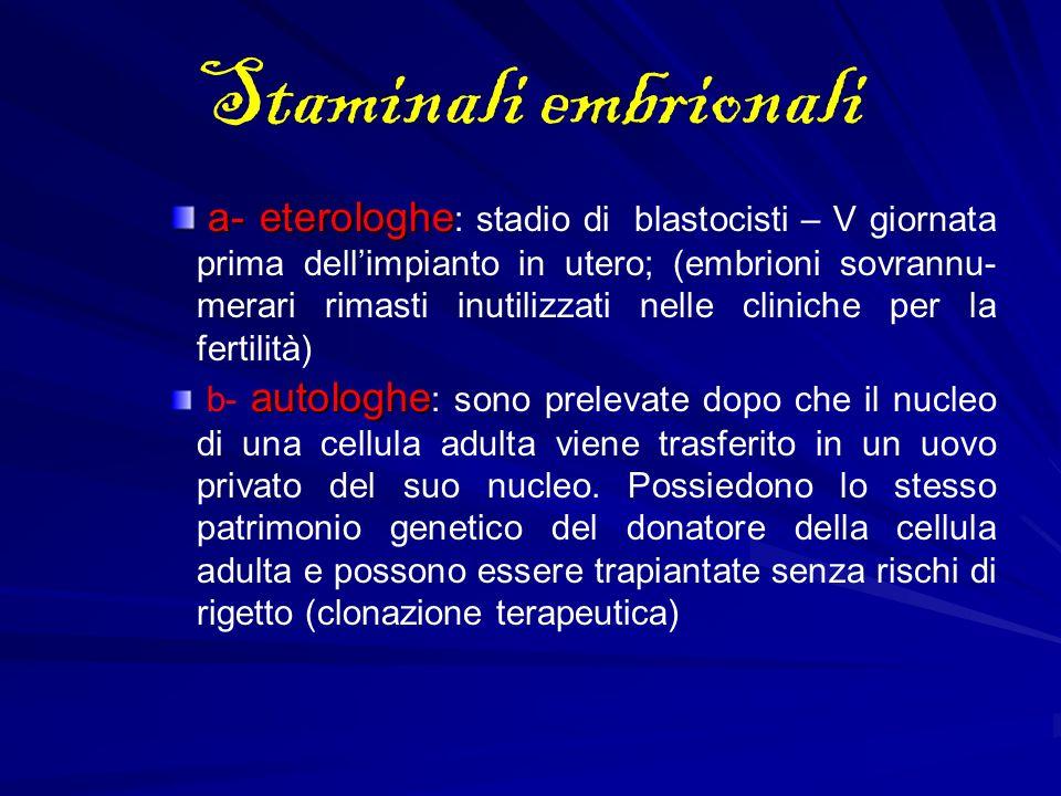 Staminali embrionali a- eterologhe a- eterologhe : stadio di blastocisti – V giornata prima dellimpianto in utero; (embrioni sovrannu- merari rimasti