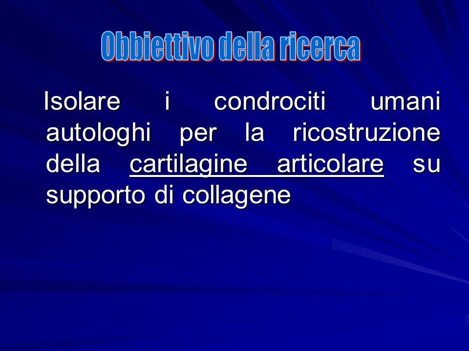 Isolare i condrociti umani autologhi per la ricostruzione della cartilagine articolare su supporto di collagene Isolare i condrociti umani autologhi p