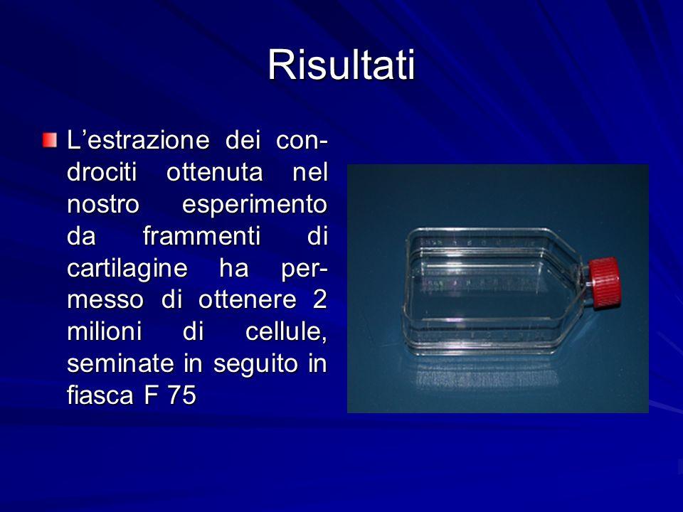 Risultati Lestrazione dei con- drociti ottenuta nel nostro esperimento da frammenti di cartilagine ha per- messo di ottenere 2 milioni di cellule, sem