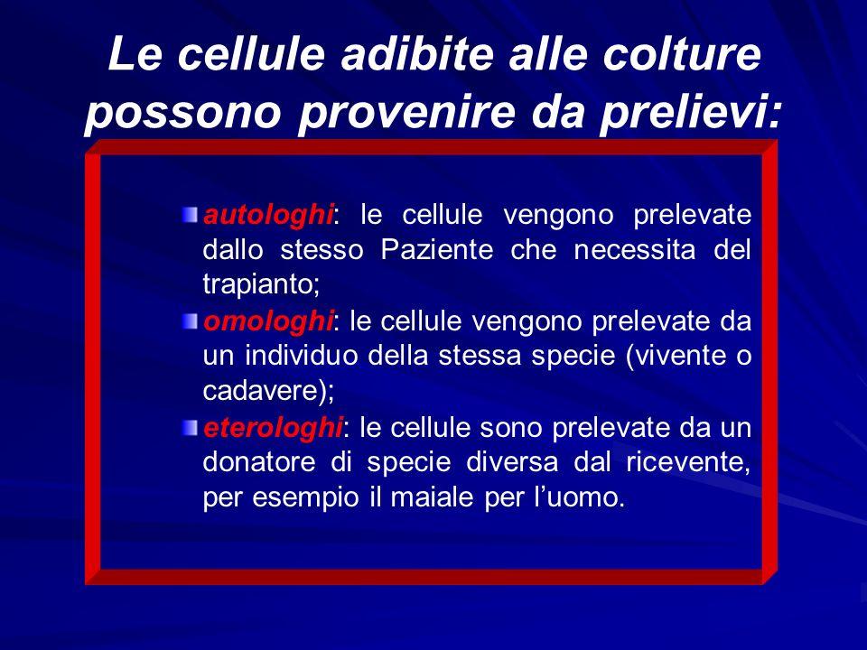 Istologia Esistono tre tipi di cartilagine: Esistono tre tipi di cartilagine:ialina,elastica,fibrosa.