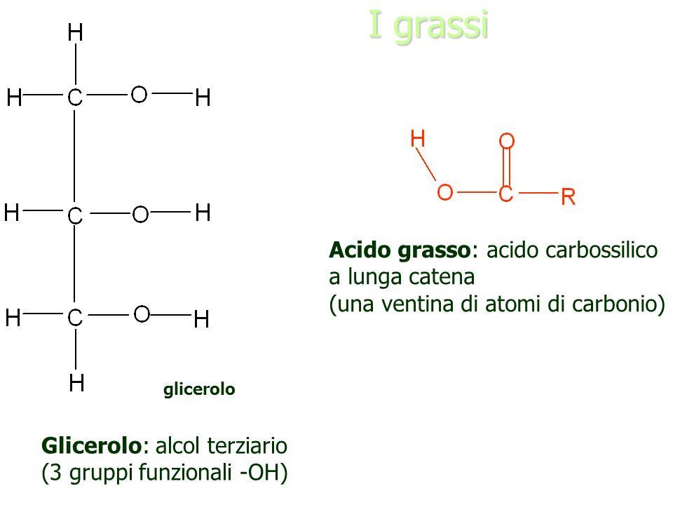 I grassi Acido grasso: acido carbossilico a lunga catena (una ventina di atomi di carbonio) glicerolo acido grasso Glicerolo: alcol terziario (3 grupp